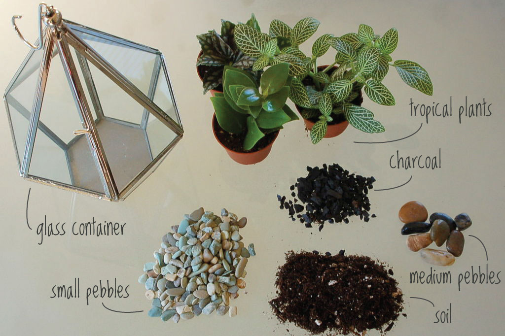 Tropical terrarium silk and cinnamon for Terrarium supplies